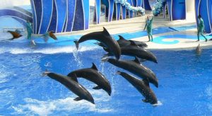 SeaWorld and Busch Gardens FL to Offer Free Admission for US Veterans
